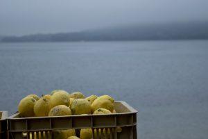 無人島レモン